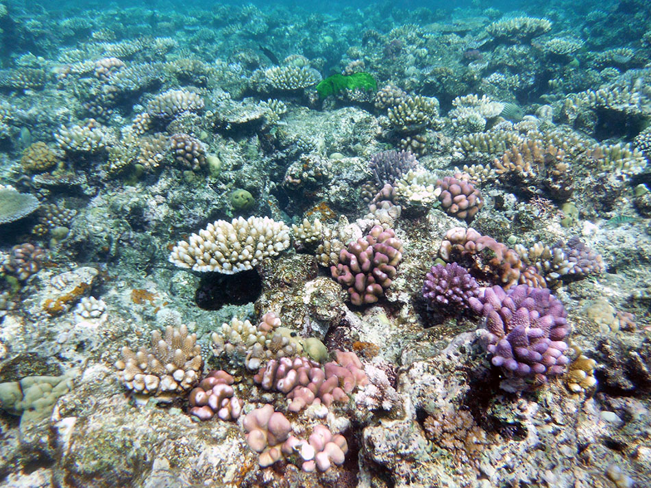 Why your sunscreen is bad for coral reefs