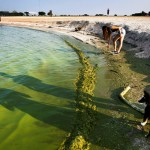 20 States Suffer From Toxic Algae, And We're Absolutely Doing Nothing About It!