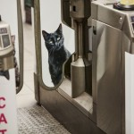 A subway station from London filled with cat photos in an innovative project of outdoor advertising