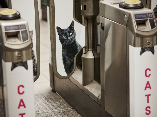 Cats in the Subway