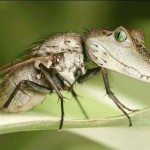 Florida Finds First Local Mosquitoes With Zika Virus
