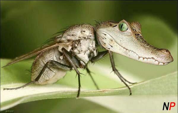 florida-mosquito