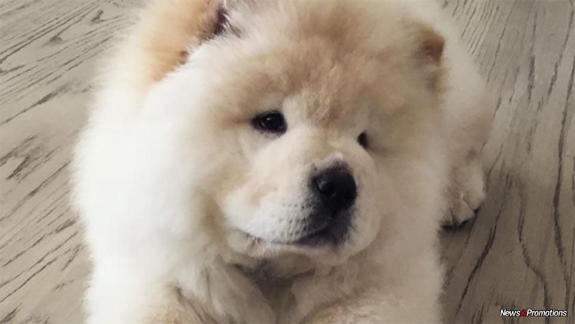 Chichi Dog Name
