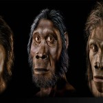 Researchers discovered mans oldest ancestor by DNA study
